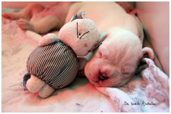 Bébés à 14 jours