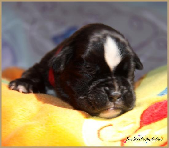 Pixie, 8 jours