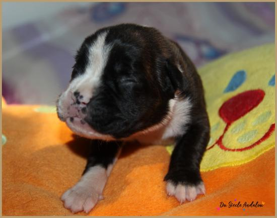 Praline, 8 jours