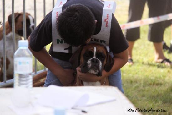 Darling - NE Cestas, Juin 2009 ~ 1ère Cl. Puppy F.Fauve