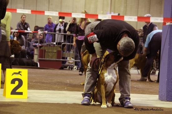 Darling - Dog Show Luxembourg, Mars 2010 ~ 1er EXC Classe Jeune