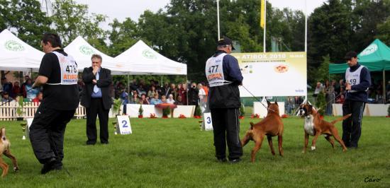 Chelton - ATIBOX Pologne Mai 2010 ~ 3éme EXC Classe Champion