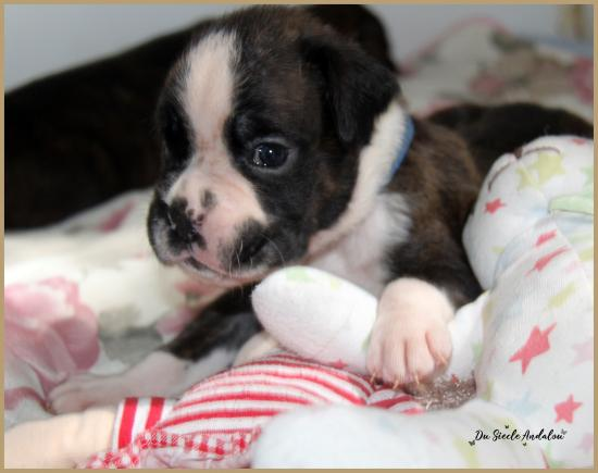 Pancho, 26 jours