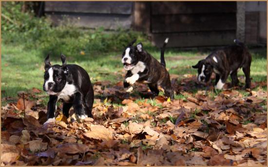 Les trois petites merveilles ! Lwillow, Lizzie & Loïs