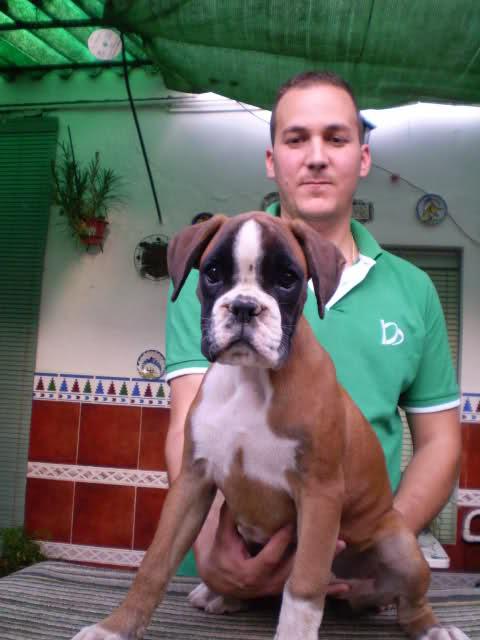 Alicia puppy