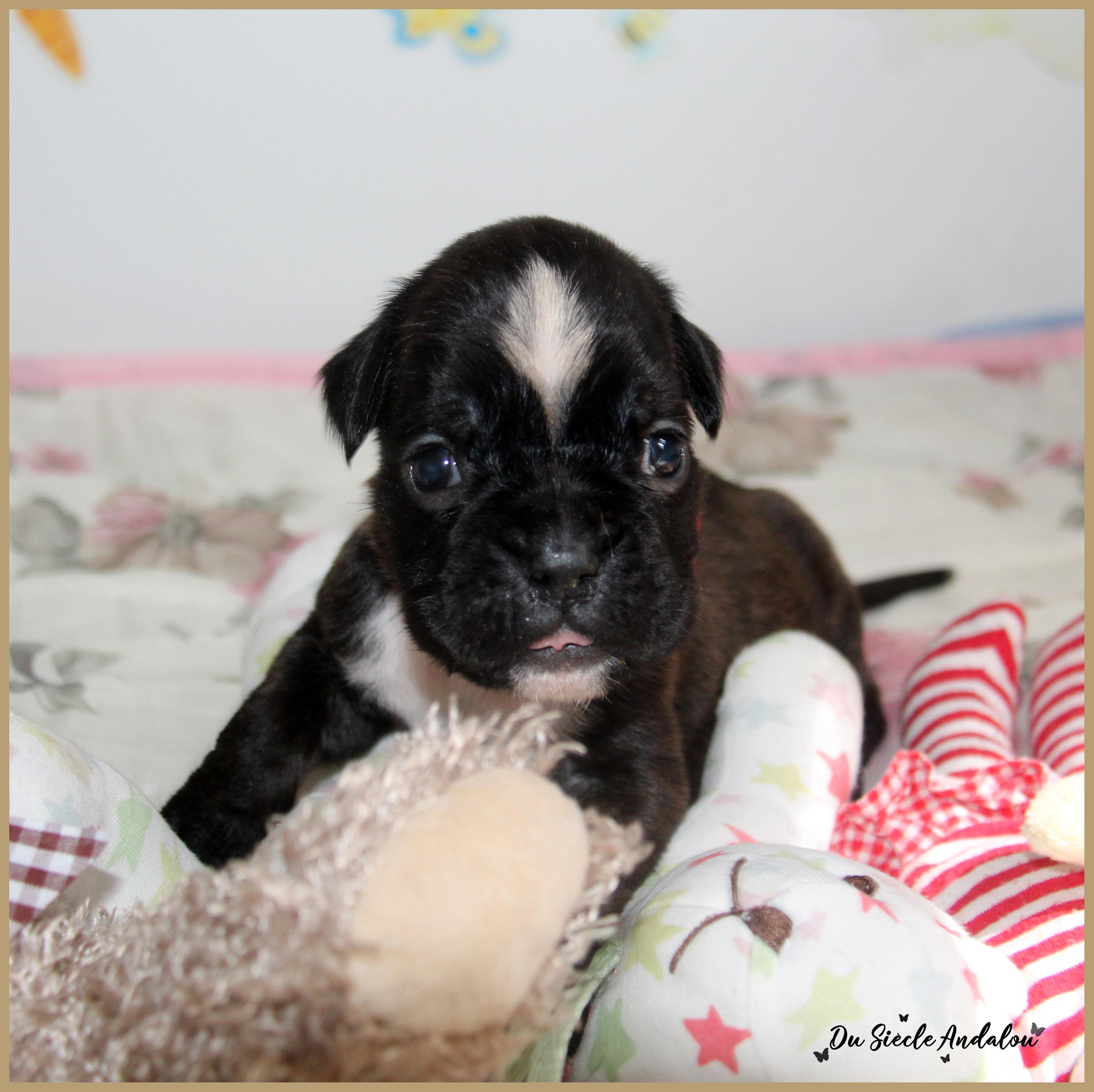 Pixie, 26 Jours