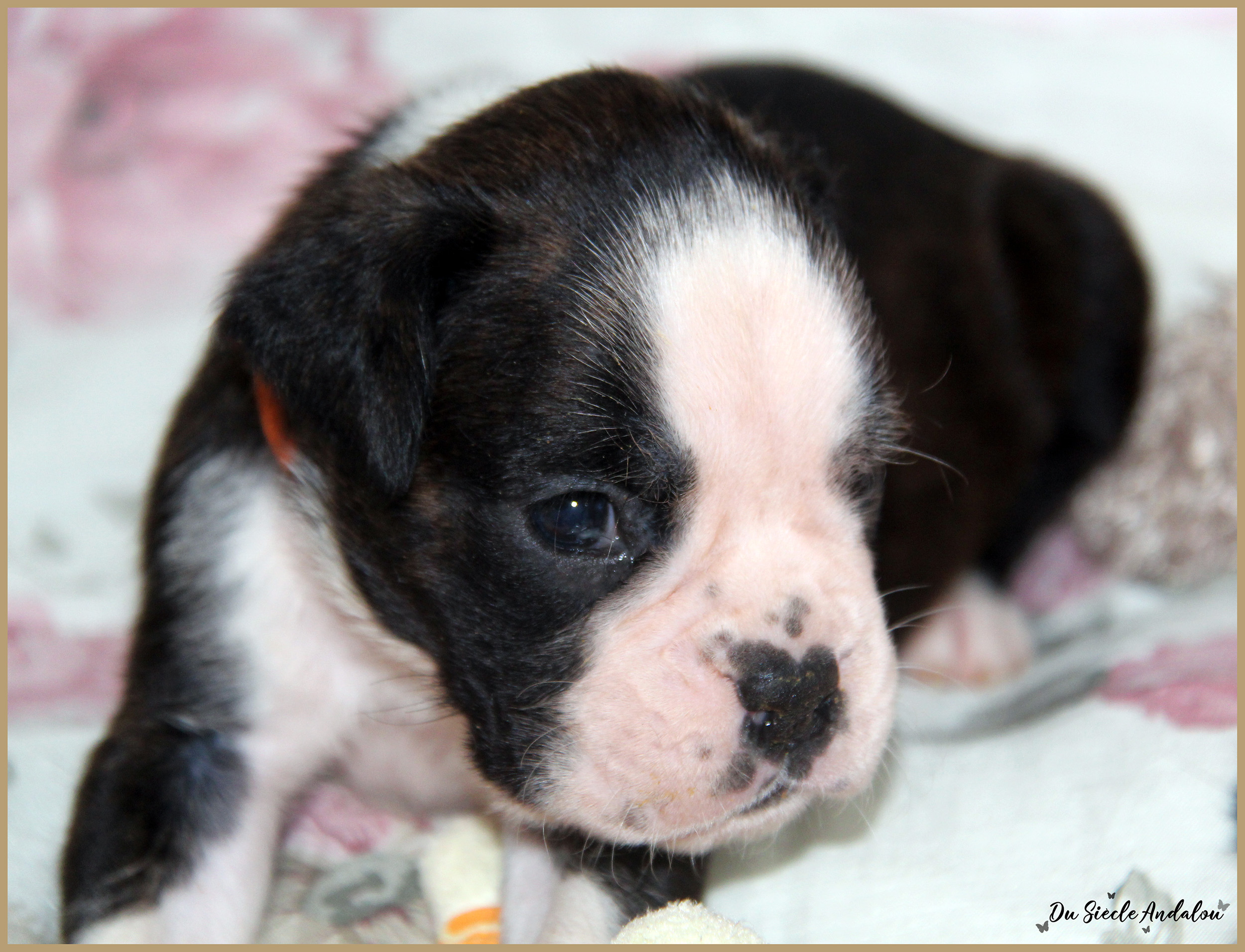 Paddy, 26 Jours