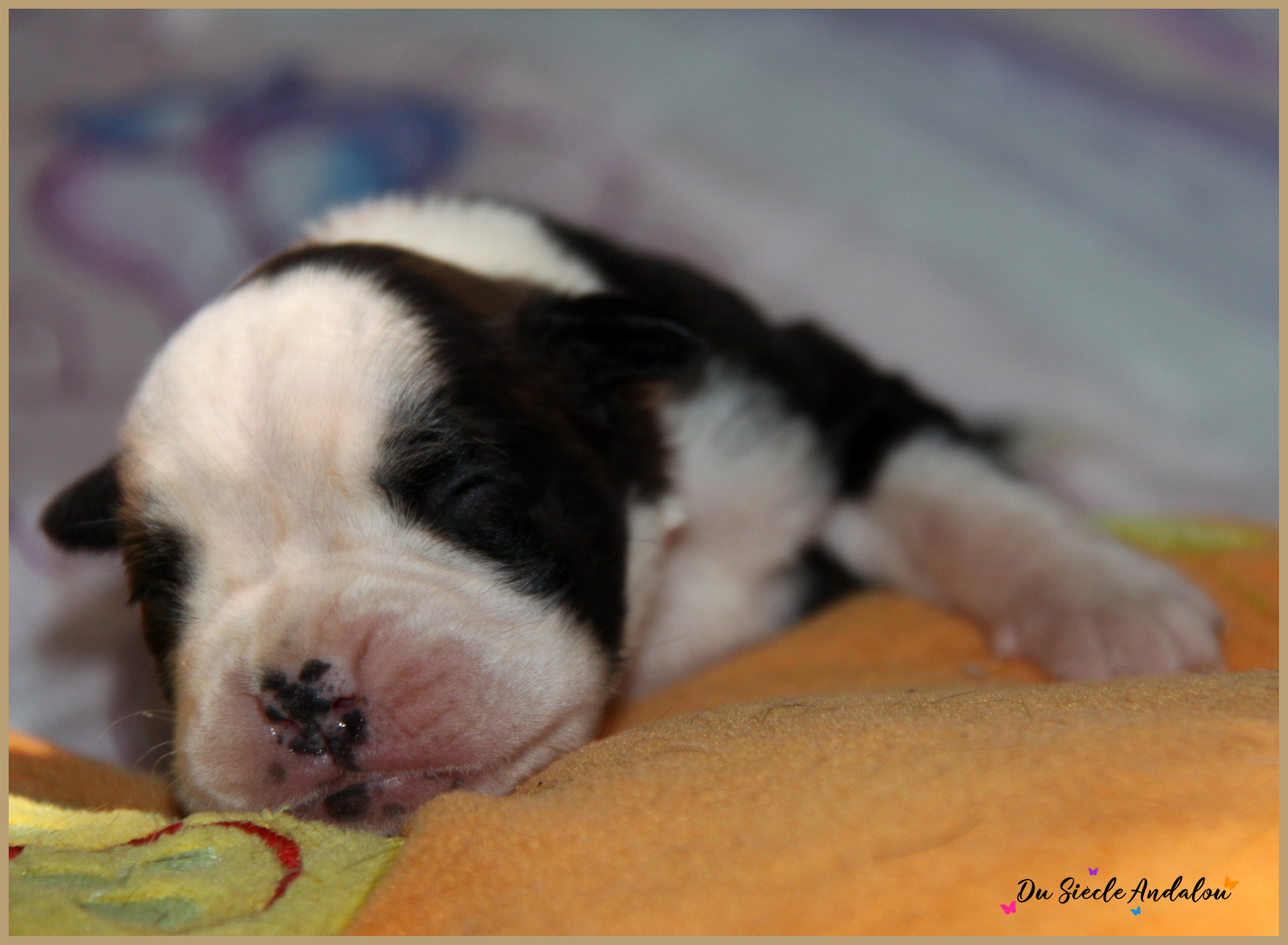 Paddy, 8 jours
