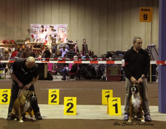 Chelton - Dog Show Luxembourg, Mars 2010 ~ 1er EXC Classe Champion