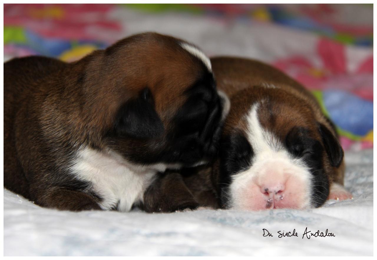 Bébés à 6 jours