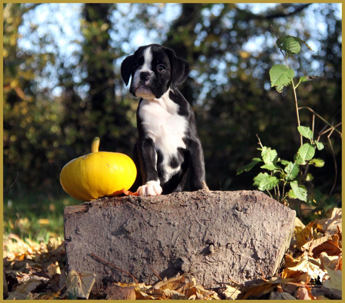 Lwillow, un jour d'automne  31.10.15