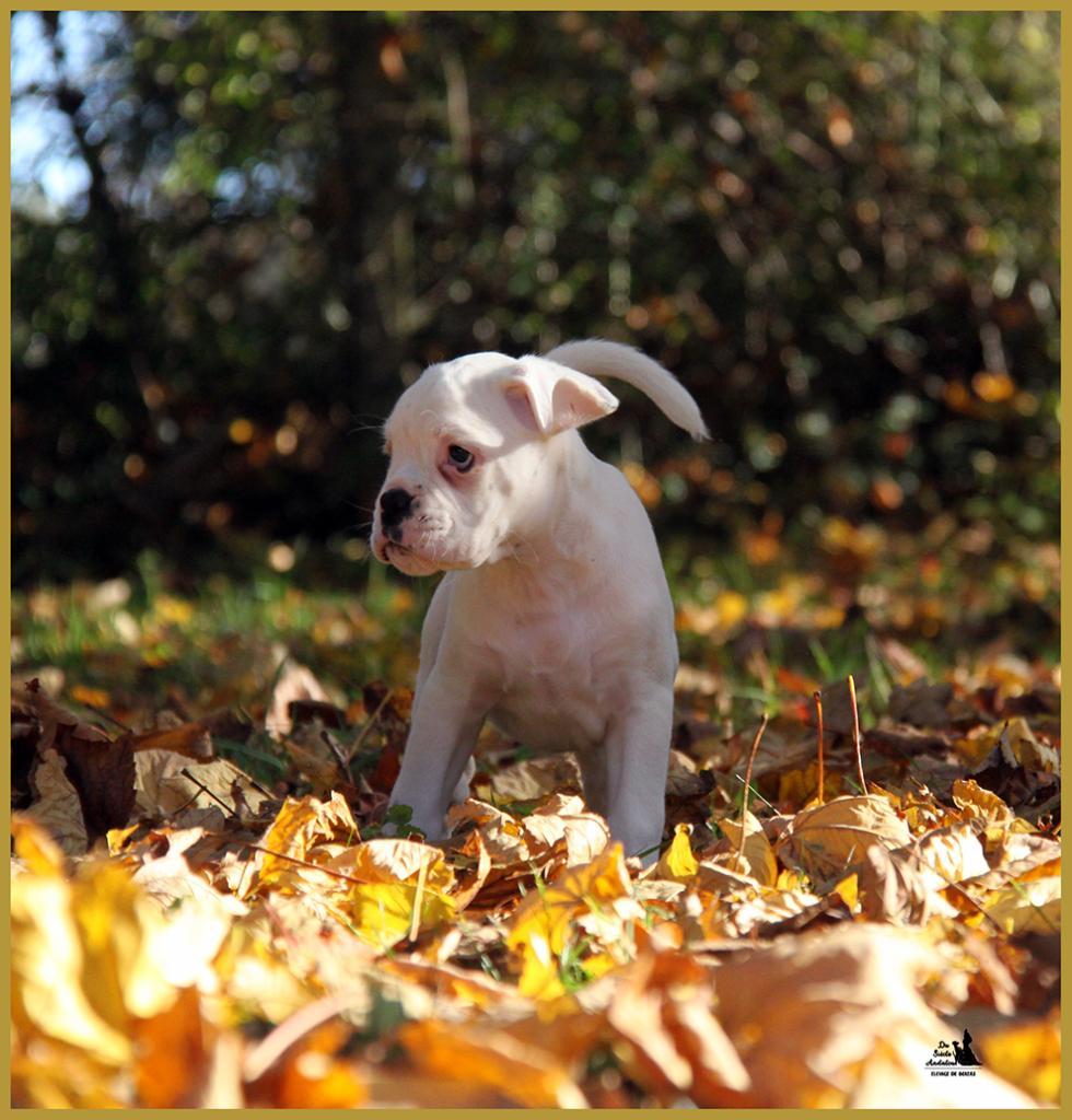 Lyla, un jour d'automne  31.10.15