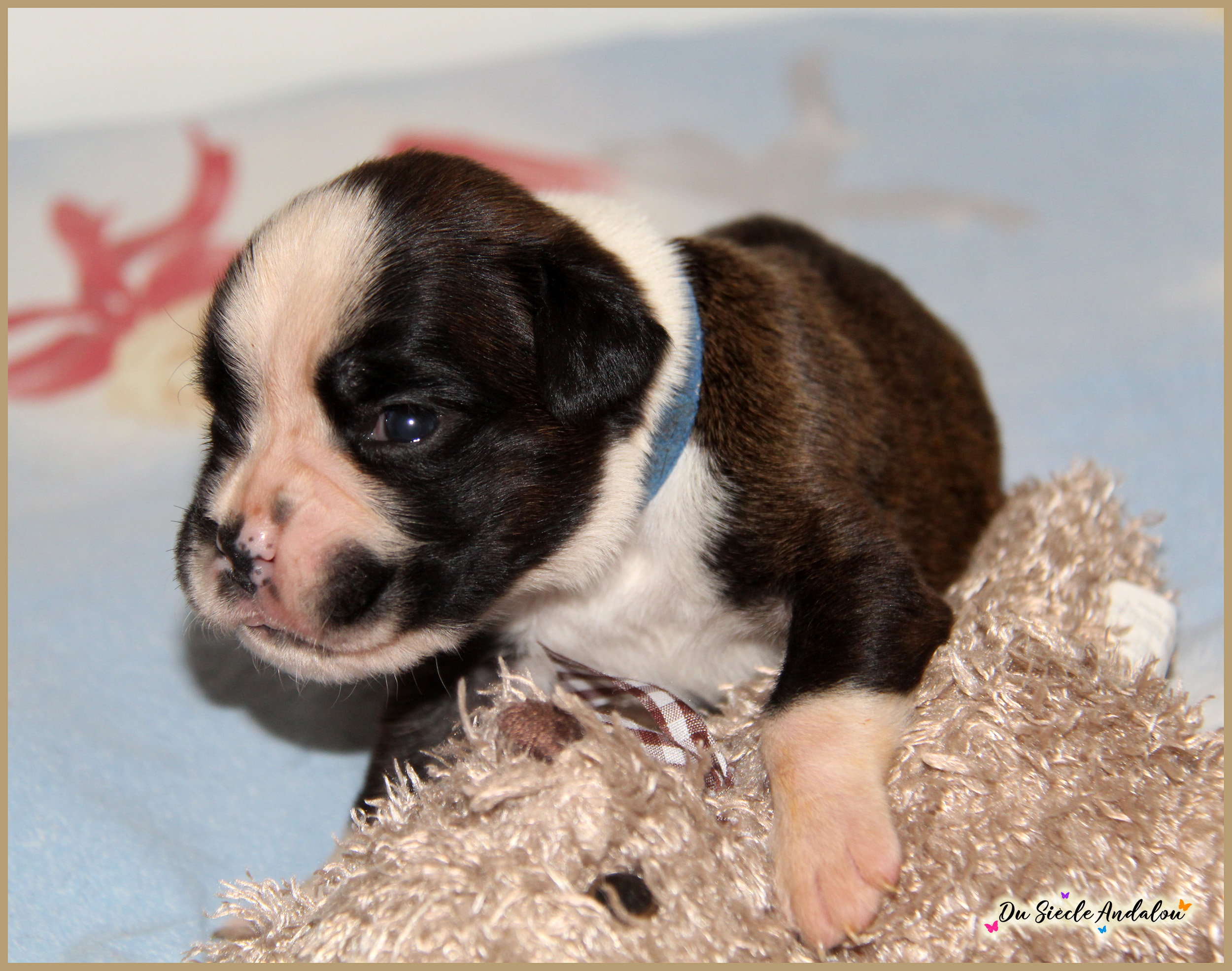 Pancho, 15 jours