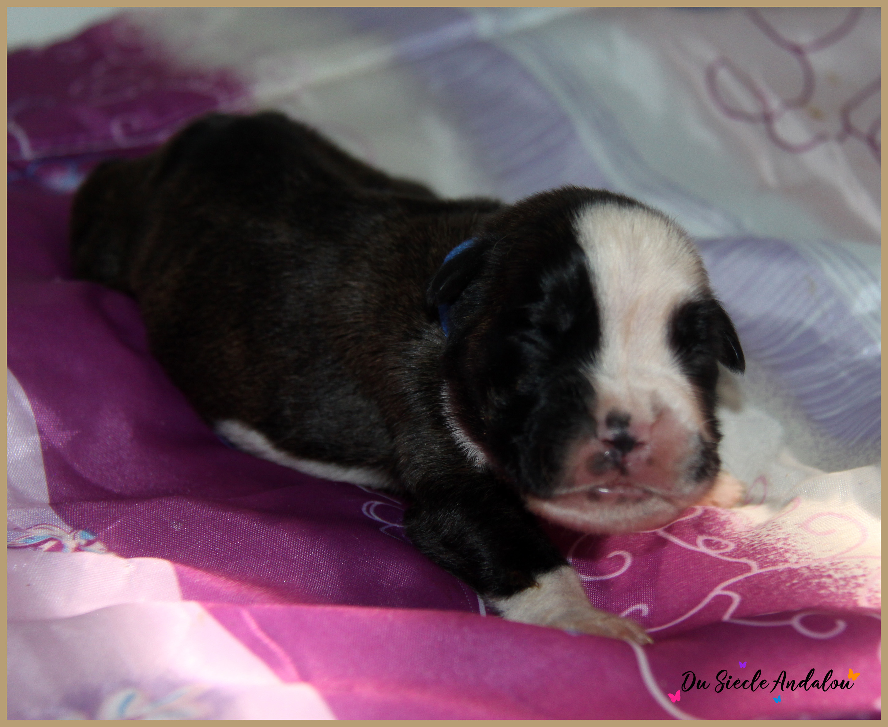 Pancho, 8 jours