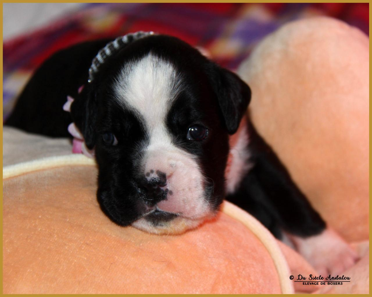 Molly, 17 Jours
