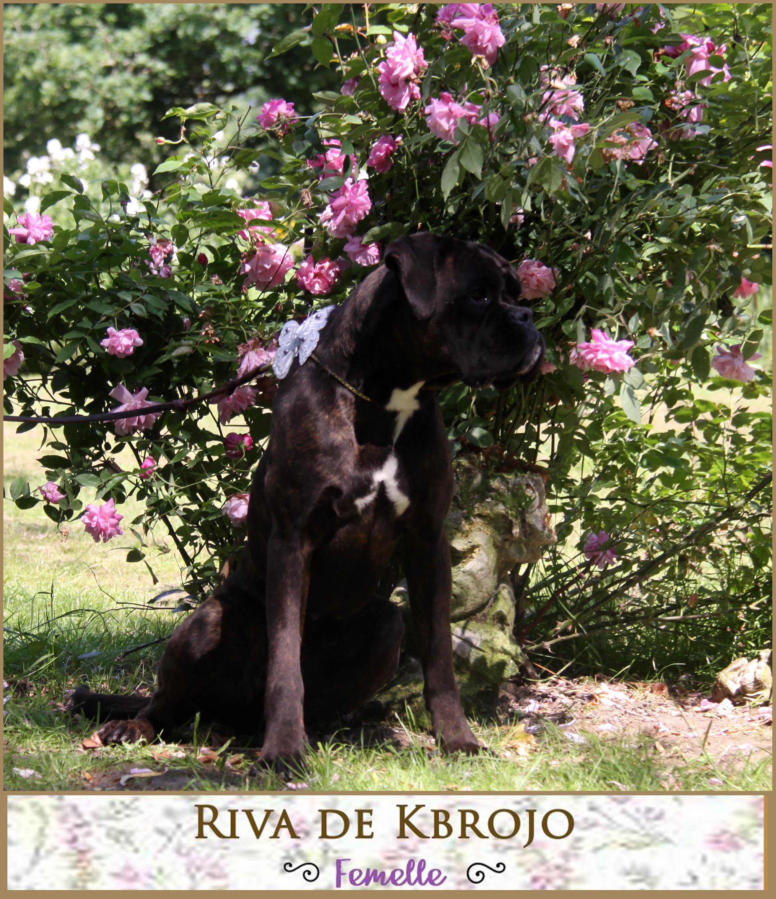 Riva de Kbrojo